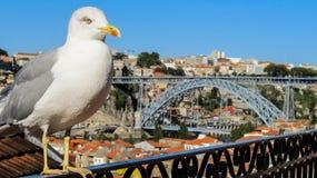 与Dom我在背景中跨接的LuÃs的逗人喜爱的海鸥 免版税图库摄影