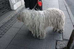 与dreadlocks的大白色狗 库存照片
