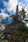 与eifel的开花的木兰树在背景耸立 库存照片