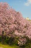 与fllowering的灌木的Svaty科比 捷克mikulov共和国 免版税库存照片