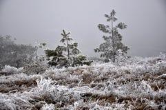 与frost_10的冬天风景 图库摄影