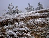 与frost_11的冬天风景 免版税库存照片