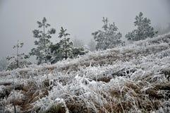 与frost_13的冬天风景 免版税库存图片