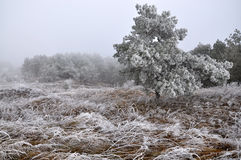 与frost_14的冬天风景 免版税库存照片