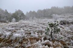 与frost_15的冬天风景 图库摄影