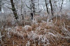 与frost_16的冬天风景 库存照片