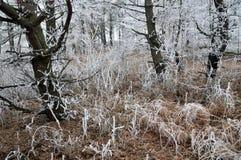 与frost_17的冬天风景 库存照片