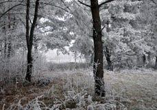 与frost_18的冬天风景 免版税库存图片