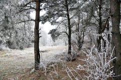 与frost_19的冬天风景 库存照片