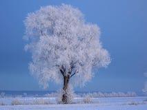 与glacè结冰的树 库存图片