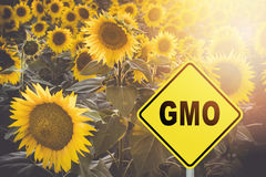 与gmo标志的向日葵领域 免版税库存图片