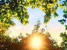 与greenleave的阳光 库存图片