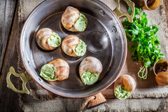 与hebrs和大蒜黄油的自创蜗牛 免版税库存图片
