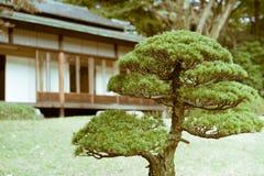 """与""""Kakuunte†茶馆的一棵盆景树在背景中 免版税库存图片"""