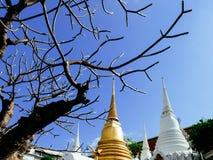 与lilawadee树的白色和金黄chedis皇家cemetry在Wat Ratchabopit 库存图片