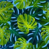 与Monstera叶子的热带无缝的样式 时兴的植物例证 夏天背景 图库摄影