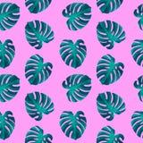 与Monstera叶子的热带无缝的样式 时兴的植物的例证 库存照片