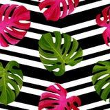 与Monstera叶子的热带无缝的样式 时兴的背景 库存图片