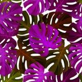 与Monstera叶子的热带无缝的样式 时兴的背景 库存照片