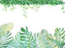 与Monstera爱树木的人的棕榈叶的热带叶子框架 向量例证