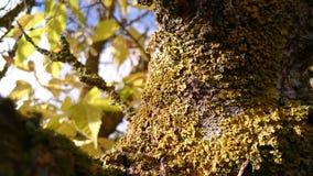 与Moos的树 免版税库存图片