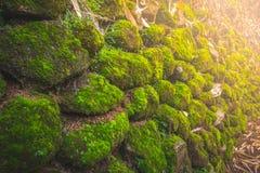 与mos的石头在北的森林里有阳光的泰国 免版税图库摄影