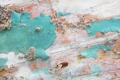 与mus的年迈的石灰化的老木破旧的别致的背景 免版税库存照片