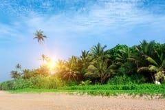 与palmtrees的美丽的热带海滩 库存图片