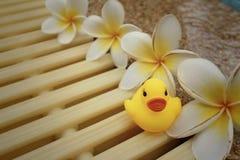 与pluemeria的黄色橡胶鸭子开花在游泳池 库存照片