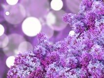 与puple丁香的抽象背景 库存图片