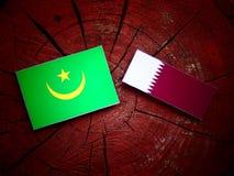 与Qatari旗子的毛里塔尼亚旗子在被隔绝的树桩 免版税图库摄影