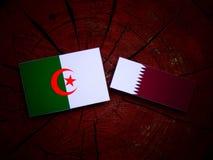 与Qatari旗子的阿尔及利亚的旗子在被隔绝的树桩 库存图片