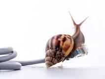 与rj45连接器符号照片的蜗牛慢互联网的 免版税库存图片