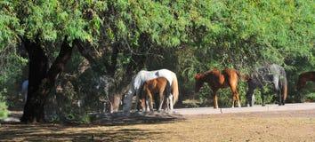 与Salt河野马的亚利桑那风景 免版税库存照片