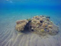 与seabottom和珊瑚礁的水下的风景 免版税库存图片