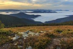 与seaclouds的树木丛生的山坡在一个草甸在罗马尼亚 免版税图库摄影