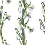 与snowdrops的传染媒介花卉无缝的样式 皇族释放例证