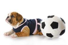 与soccerball的小狗 免版税库存图片