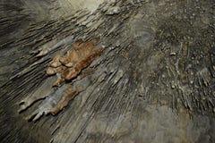 与stalactides和石笋的老洞 免版税库存图片
