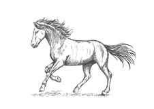 与stmping的蹄画象的腾跃的马 免版税库存照片