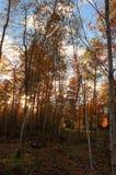 与sunsrise的秋天风景 库存图片