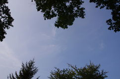 与Trees_1的天空 库存照片