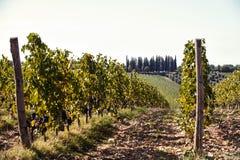 与Tuscanian葡萄园谷的风景在意大利 免版税图库摄影