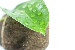 与waterdrops的绿色事假在湿石头 免版税库存照片