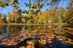 与Wilanow宫殿的Wilanà ³ -在公园筑成池塘 免版税图库摄影