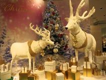 与XMas树和礼物的驯鹿--与一棵圣诞树和礼物的2头驯鹿姿势在这购物中心显示 免版税库存图片