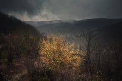 与yelow灌木的黑暗的山风景 免版税库存照片