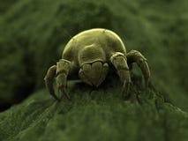 丑恶的小蜘蛛 免版税库存照片