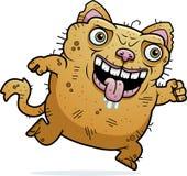 丑恶的猫赛跑 库存图片