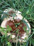丑恶的蘑菇 免版税库存照片